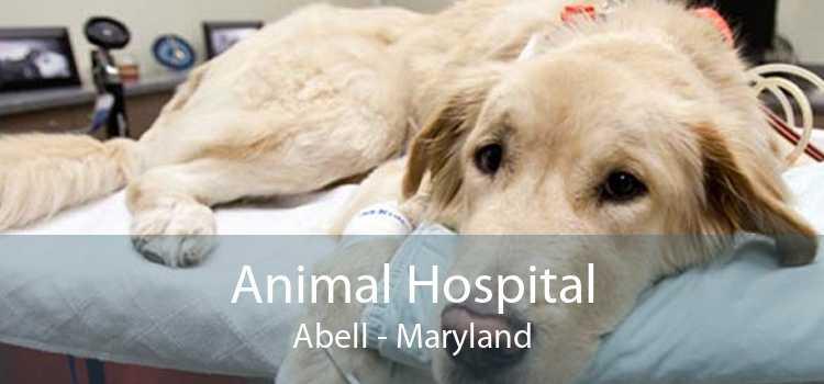 Animal Hospital Abell - Maryland