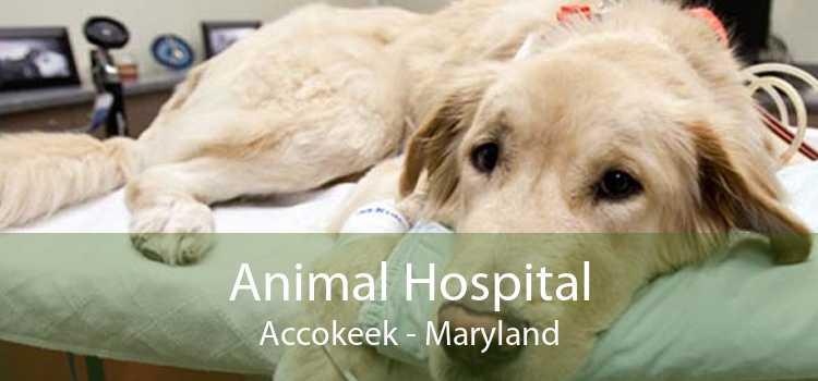 Animal Hospital Accokeek - Maryland