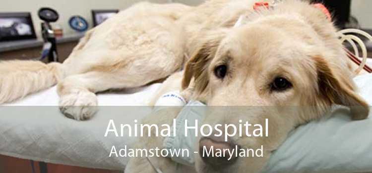 Animal Hospital Adamstown - Maryland