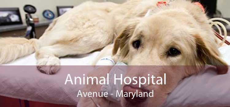 Animal Hospital Avenue - Maryland