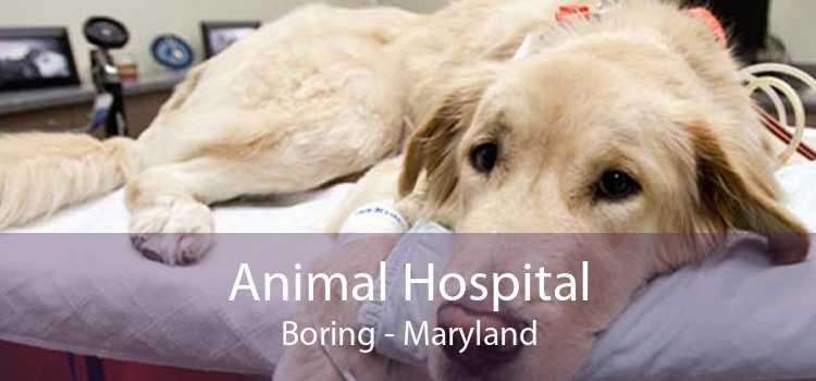 Animal Hospital Boring - Maryland