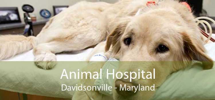 Animal Hospital Davidsonville - Maryland