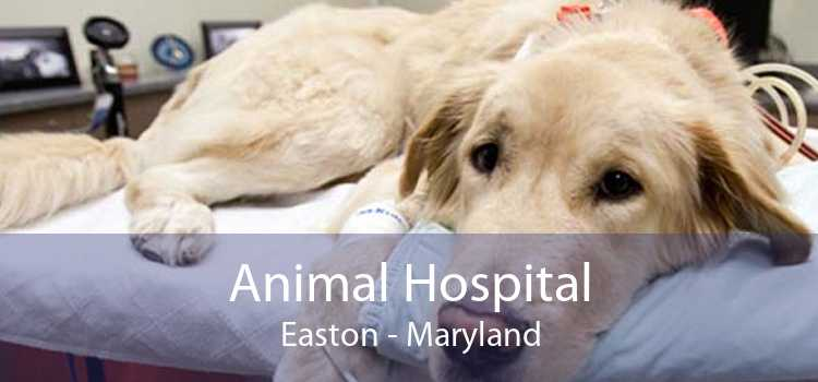 Animal Hospital Easton - Maryland