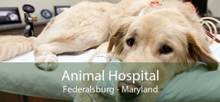 Animal Hospital Federalsburg - Maryland