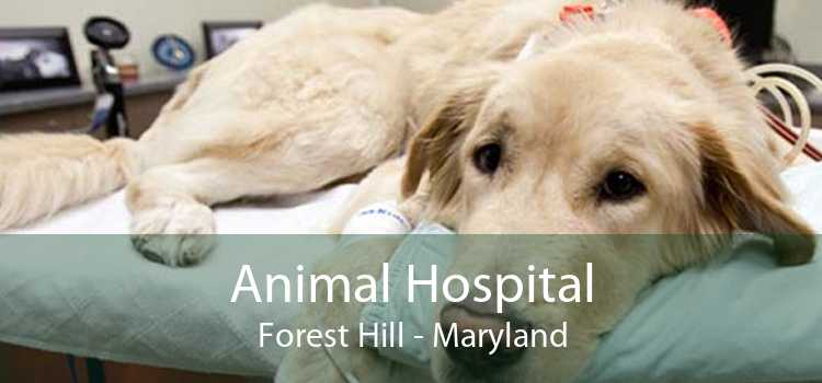 Animal Hospital Forest Hill - Maryland