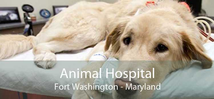 Animal Hospital Fort Washington - Maryland