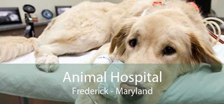 Animal Hospital Frederick - Maryland