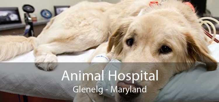 Animal Hospital Glenelg - Maryland