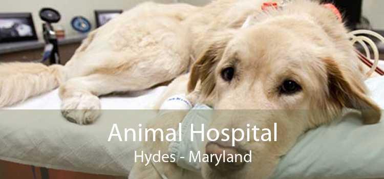 Animal Hospital Hydes - Maryland