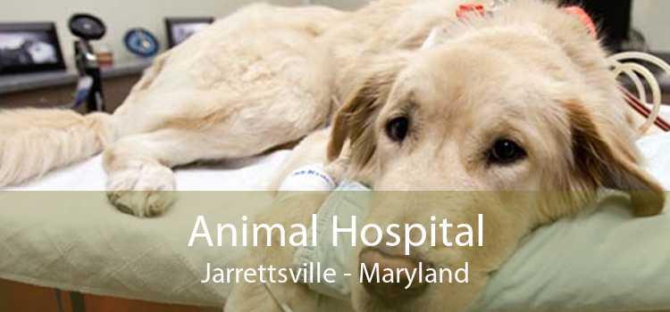 Animal Hospital Jarrettsville - Maryland