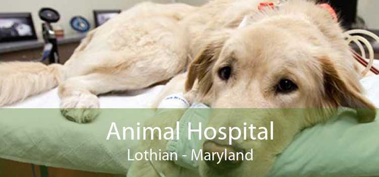 Animal Hospital Lothian - Maryland