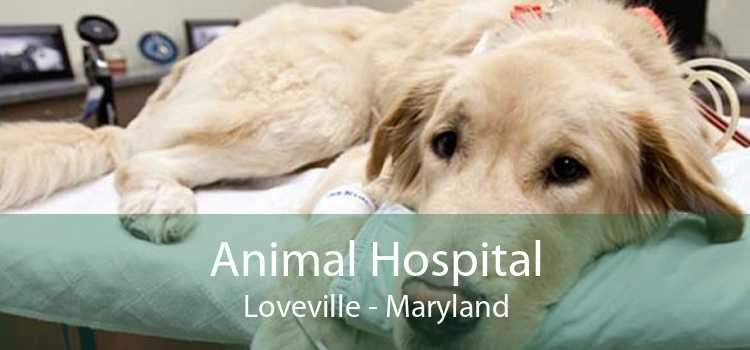 Animal Hospital Loveville - Maryland