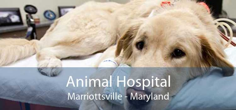 Animal Hospital Marriottsville - Maryland