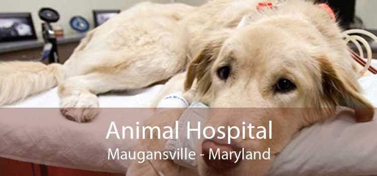 Animal Hospital Maugansville - Maryland