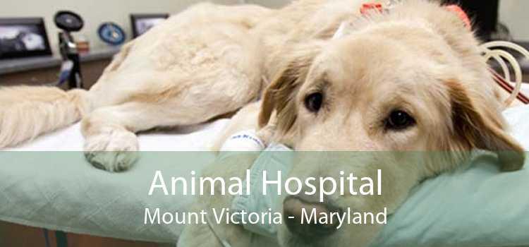 Animal Hospital Mount Victoria - Maryland