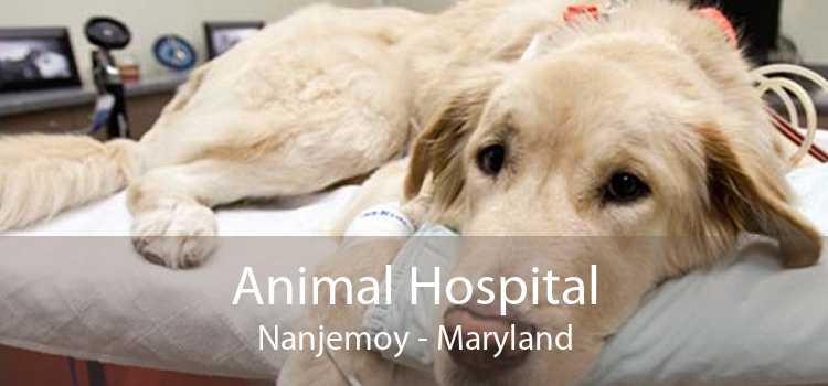 Animal Hospital Nanjemoy - Maryland