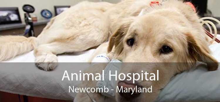Animal Hospital Newcomb - Maryland