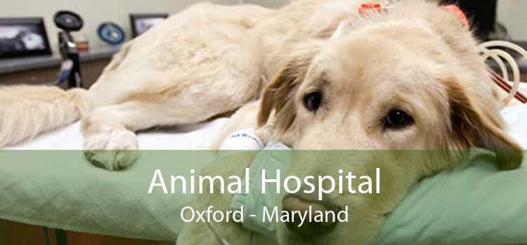 Animal Hospital Oxford - Maryland