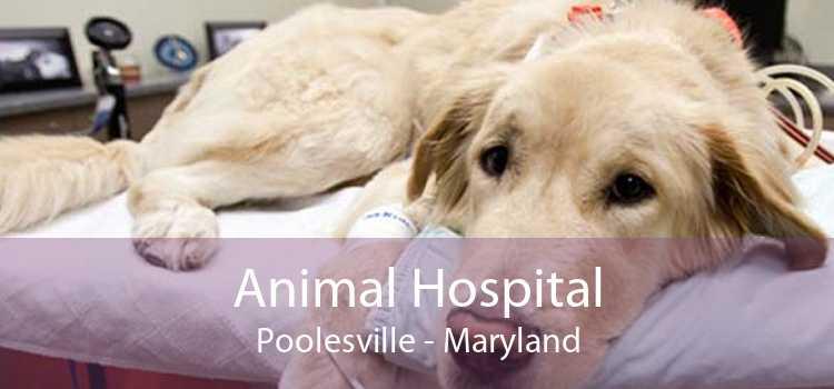 Animal Hospital Poolesville - Maryland