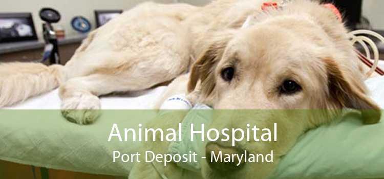 Animal Hospital Port Deposit - Maryland