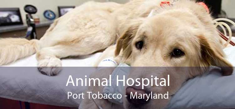 Animal Hospital Port Tobacco - Maryland