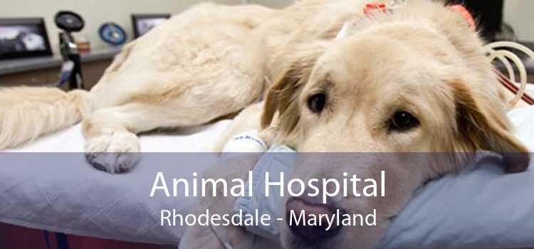 Animal Hospital Rhodesdale - Maryland