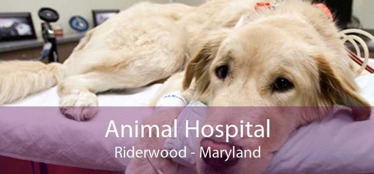 Animal Hospital Riderwood - Maryland