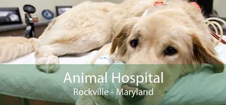 Animal Hospital Rockville - Maryland