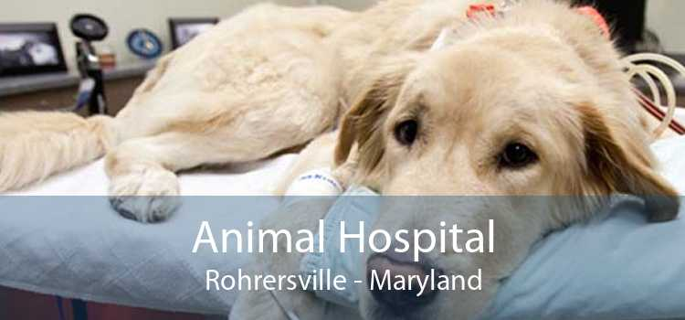 Animal Hospital Rohrersville - Maryland