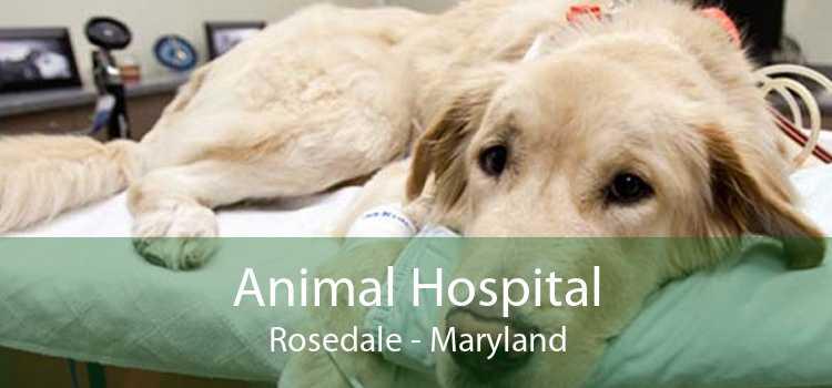 Animal Hospital Rosedale - Maryland