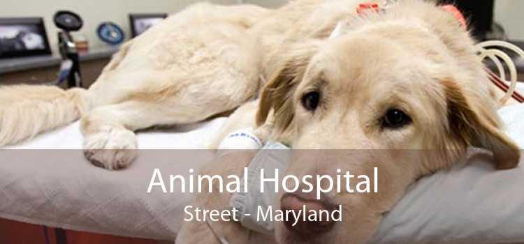 Animal Hospital Street - Maryland