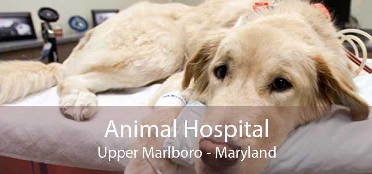 Animal Hospital Upper Marlboro - Maryland