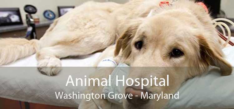 Animal Hospital Washington Grove - Maryland