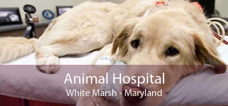 Animal Hospital White Marsh - Maryland