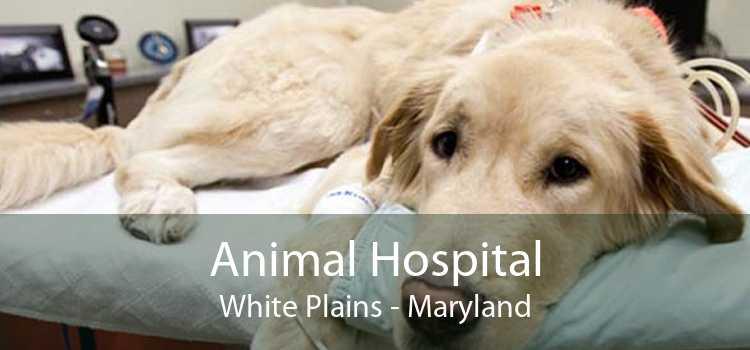 Animal Hospital White Plains - Maryland