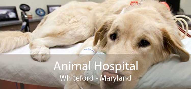 Animal Hospital Whiteford - Maryland