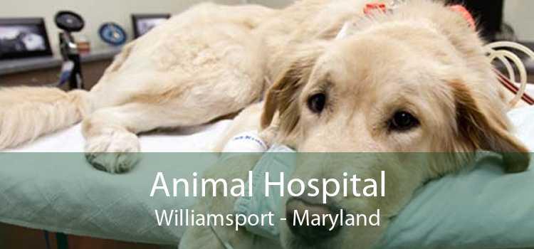 Animal Hospital Williamsport - Maryland