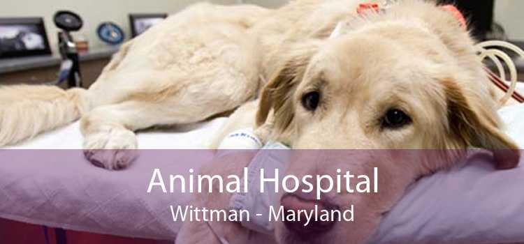 Animal Hospital Wittman - Maryland