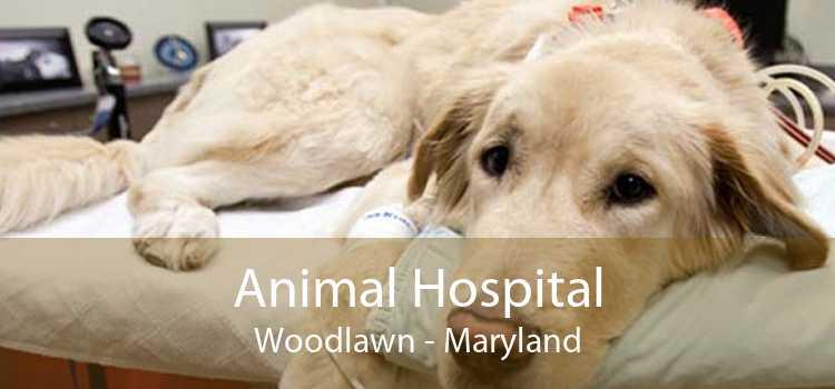 Animal Hospital Woodlawn - Maryland