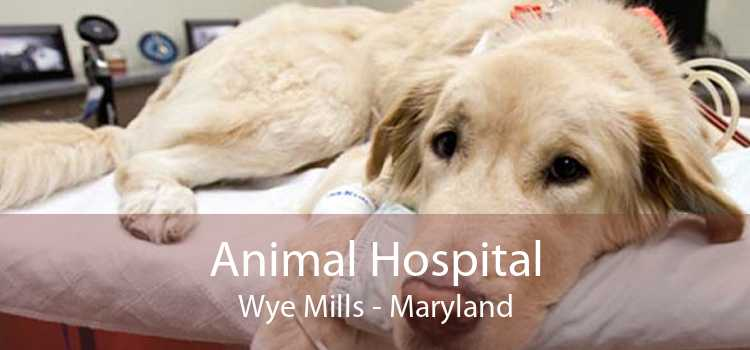 Animal Hospital Wye Mills - Maryland