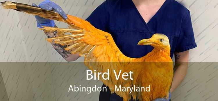 Bird Vet Abingdon - Maryland
