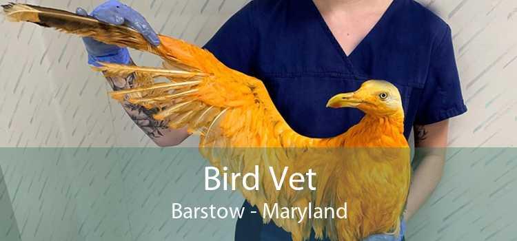Bird Vet Barstow - Maryland