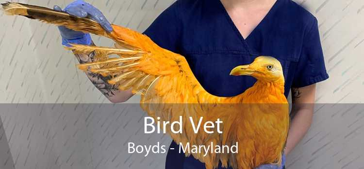 Bird Vet Boyds - Maryland