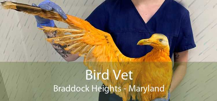 Bird Vet Braddock Heights - Maryland