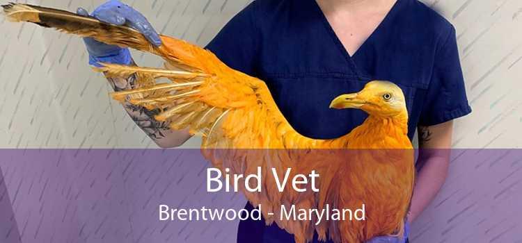 Bird Vet Brentwood - Maryland