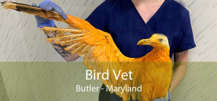 Bird Vet Butler - Maryland
