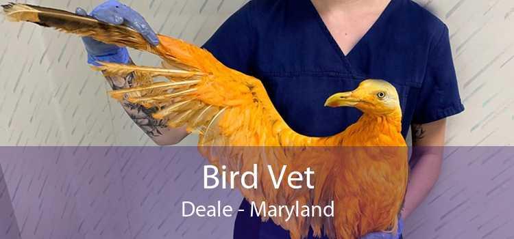 Bird Vet Deale - Maryland