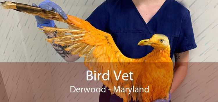 Bird Vet Derwood - Maryland