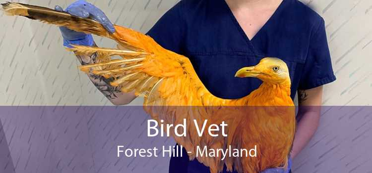 Bird Vet Forest Hill - Maryland