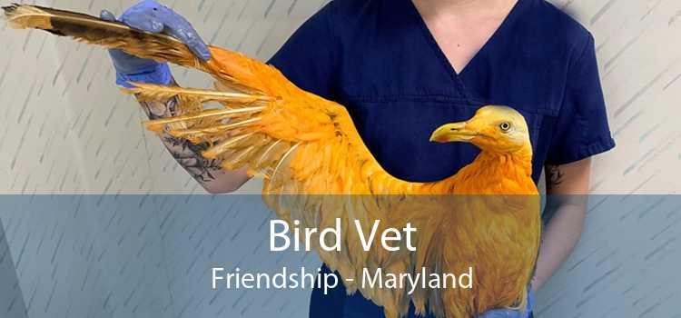 Bird Vet Friendship - Maryland